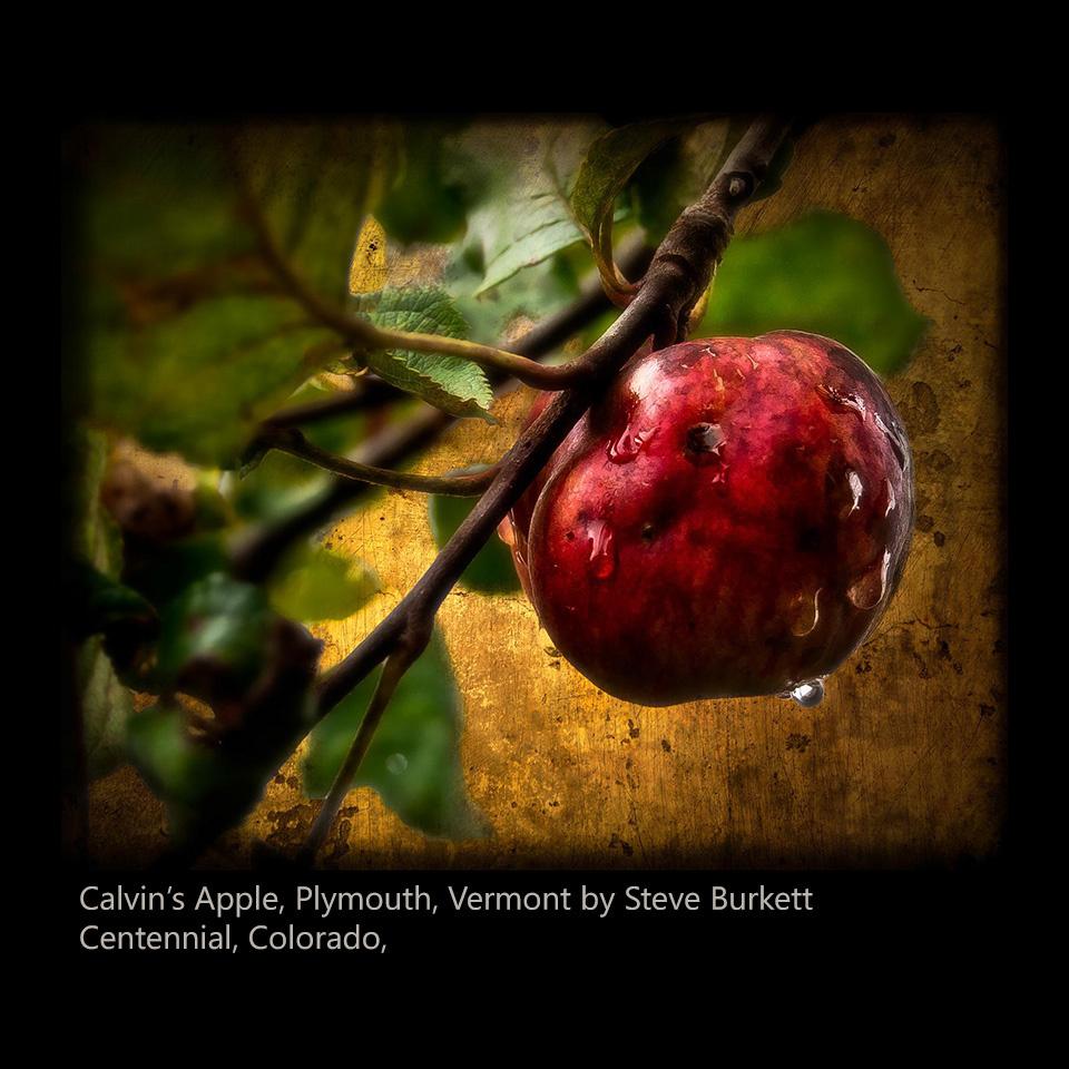 Burkett, Steve - Calvin's Apple