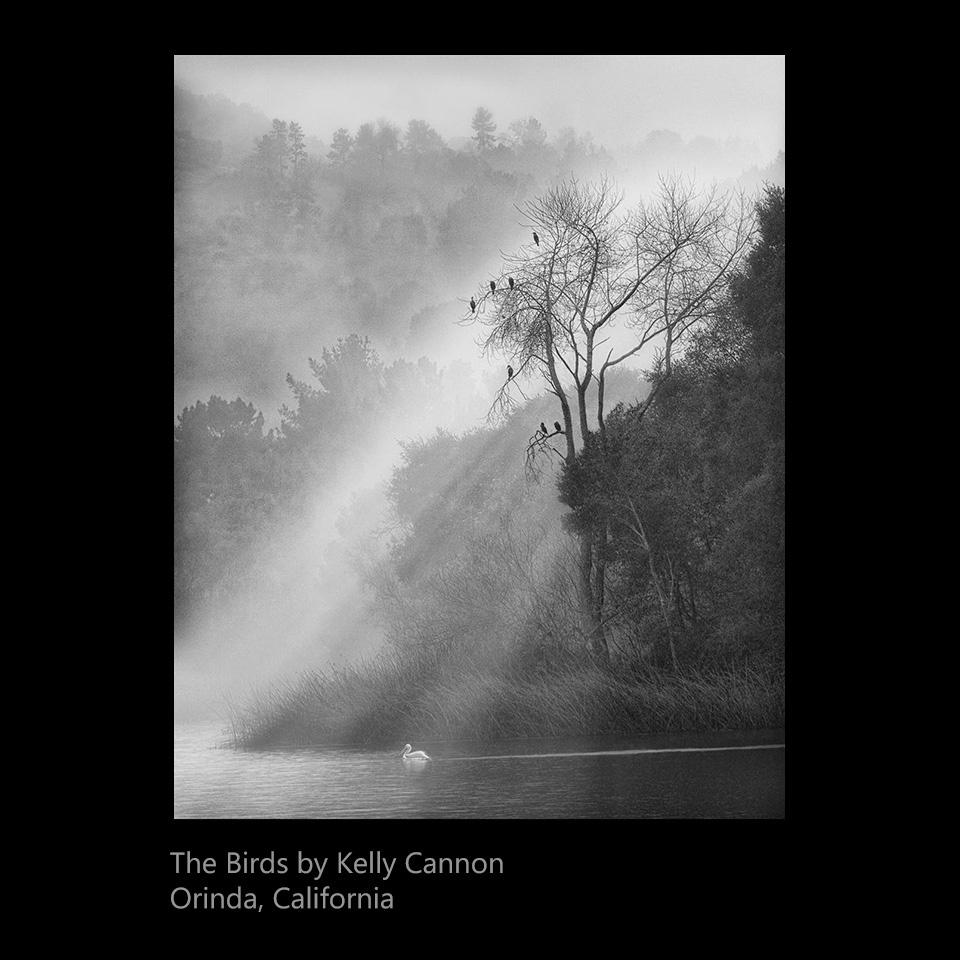 Cannon, Kelly - The Birds