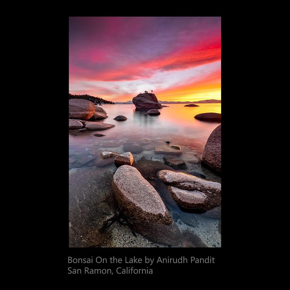 Pandit, Anirudh - Bonsai on the Lake
