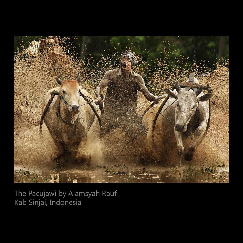 Rauf, Alamsyah - The Pacujawi