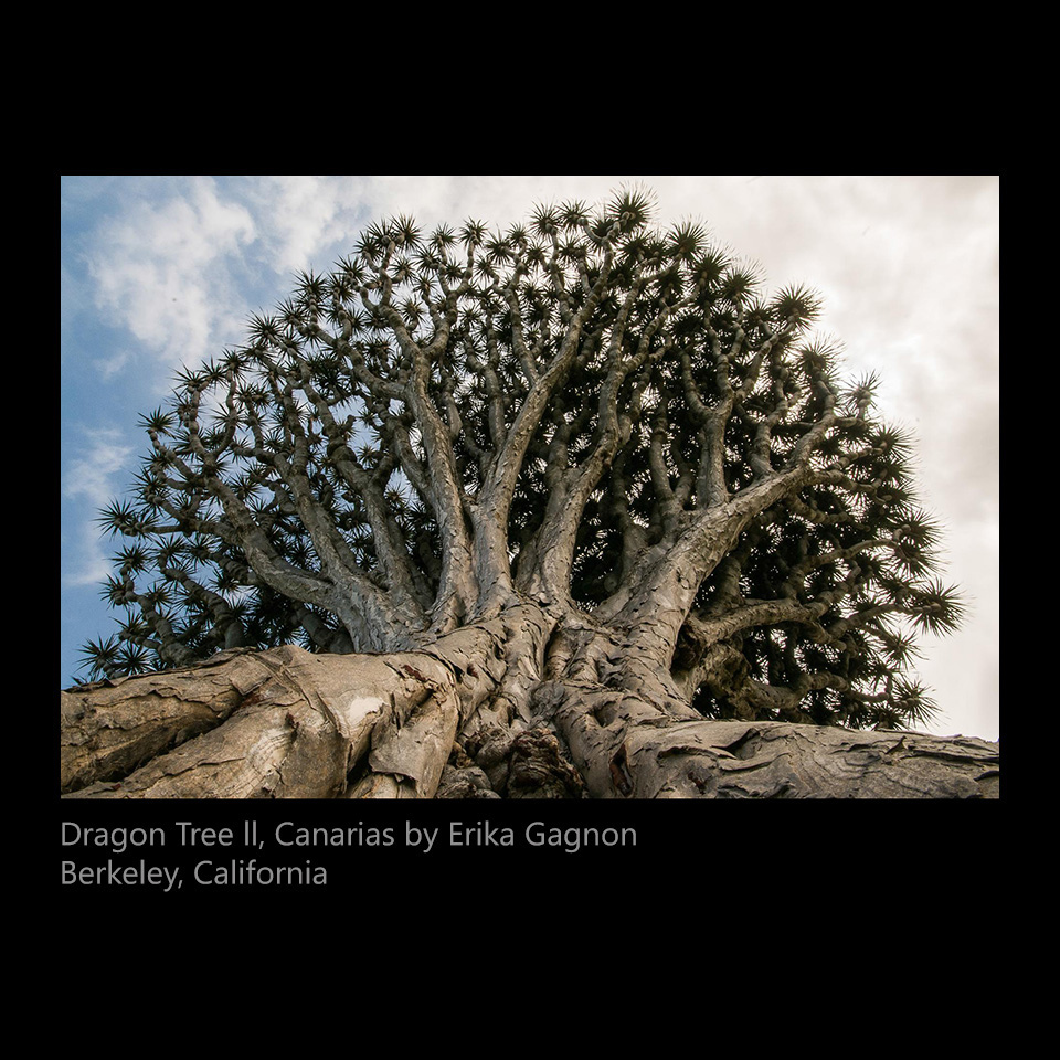 gagnon, Erika - Dragon Tree ll